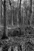 the wetlands (2 of 21)