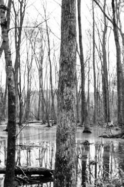 the wetlands (9 of 21)