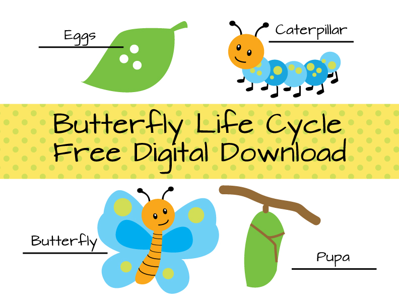 Butterfly Life Cycle Free Download