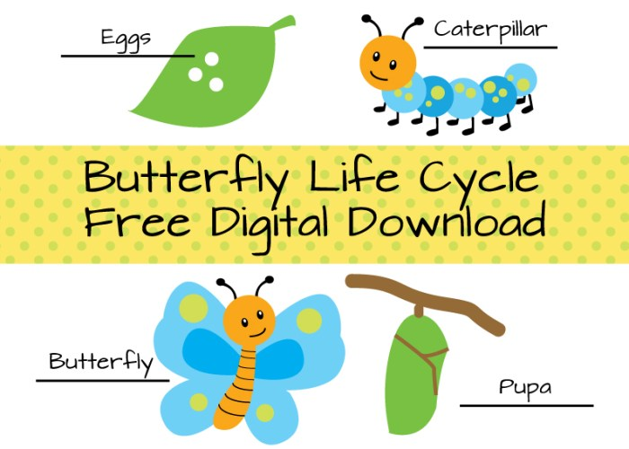 Butterfly Life Cycle Download