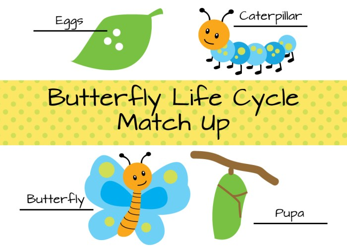 Match Butterfly Life Cycle