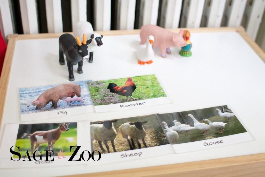 Farm Animal Picture Match-25