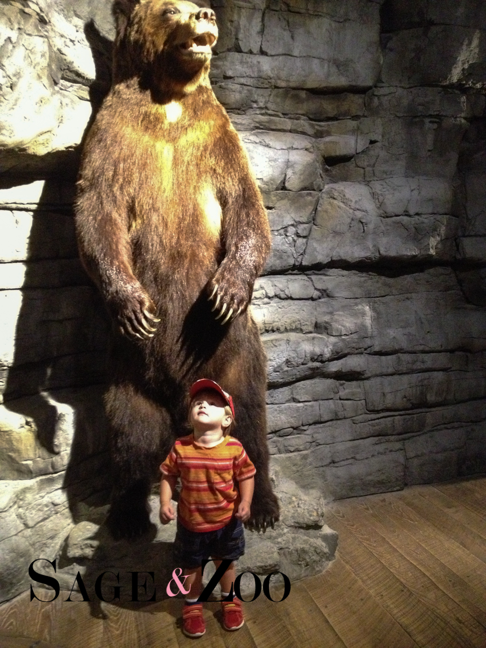 Bass Pro- The Bear (1 of 1)