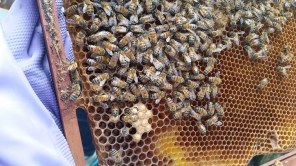 Bees being birthed