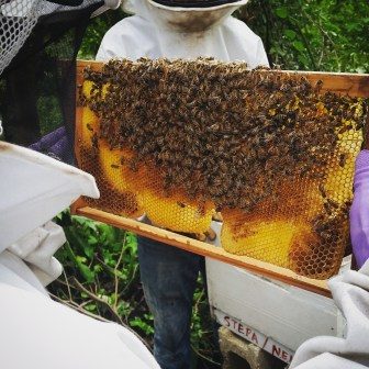 Inspecting the hive