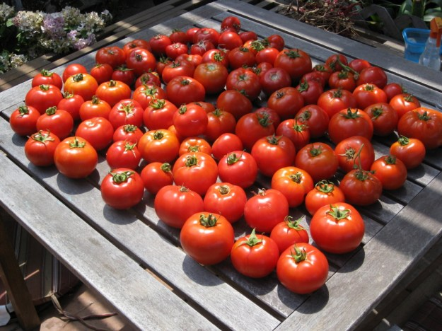 san diego tomato