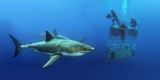 Cage Diving and Great White Shark in Isla de Guadalupe, Mexico [Video + Photos]