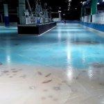 【福岡スペースワールド】魚氷漬けスケートリンク画像や批判の声まとめ