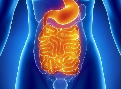 Intestines tr