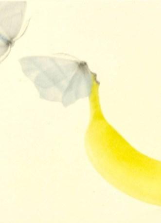 Mikio Watanabé. Une banane. 2014. Manière noire.