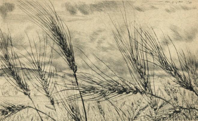André Jacquemin - Blé primitif en Velay
