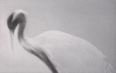 Mikio Watanabé. Feathered Light I. 2012. Manière noire.