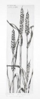 André Jacquemin - Les épis de blé fleuris - 1971 - Pointe sèche.