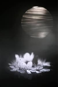 Mikio Watanabe. Sans titre. 2011. Photographie.