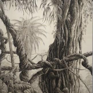 François Houtin - L'arbre aux bois de cerf - Rio, Parque Lage et Jardin Botanique