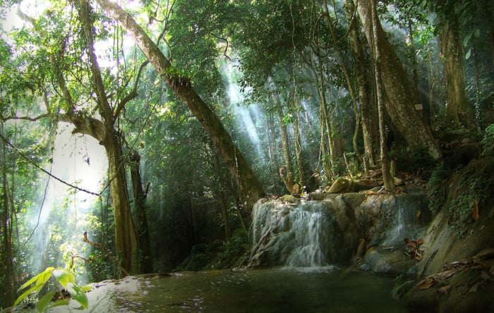 Hutan Lindung Wehea Kutai