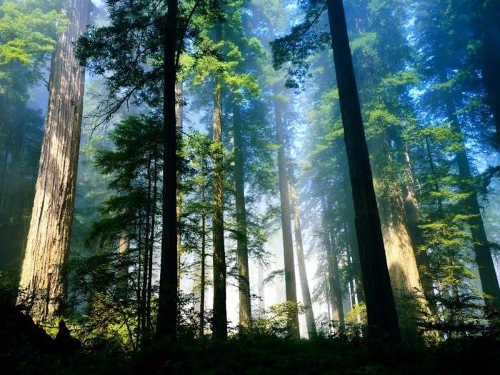 Hutan Hujan Tropis
