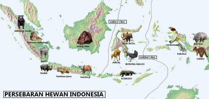 Hasil gambar untuk keanekaragaman hayati di indonesia