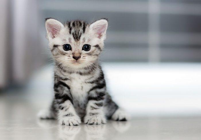 Kucing adalah salah satu hewan peliharaan yang kian populer Inspirasi Nama Kucing