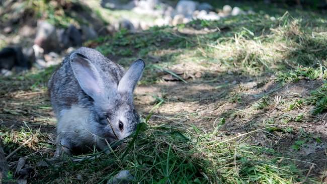 Rabbit Park Blitar ~ Rumah Kelinci Ala Hobbit