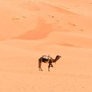 5 days Morocco desert tour