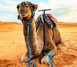 7 days desert tour from casablanca