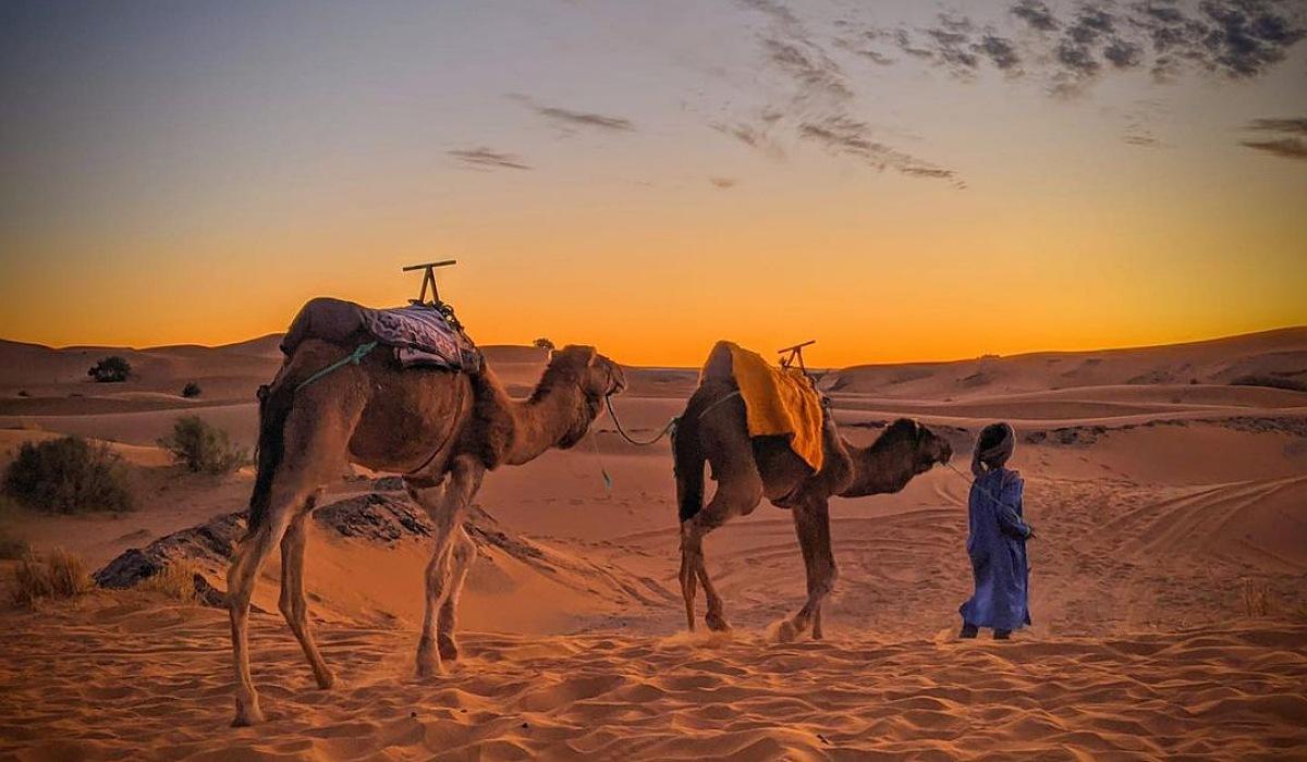 Overnight Camel trek in Merzouga desert