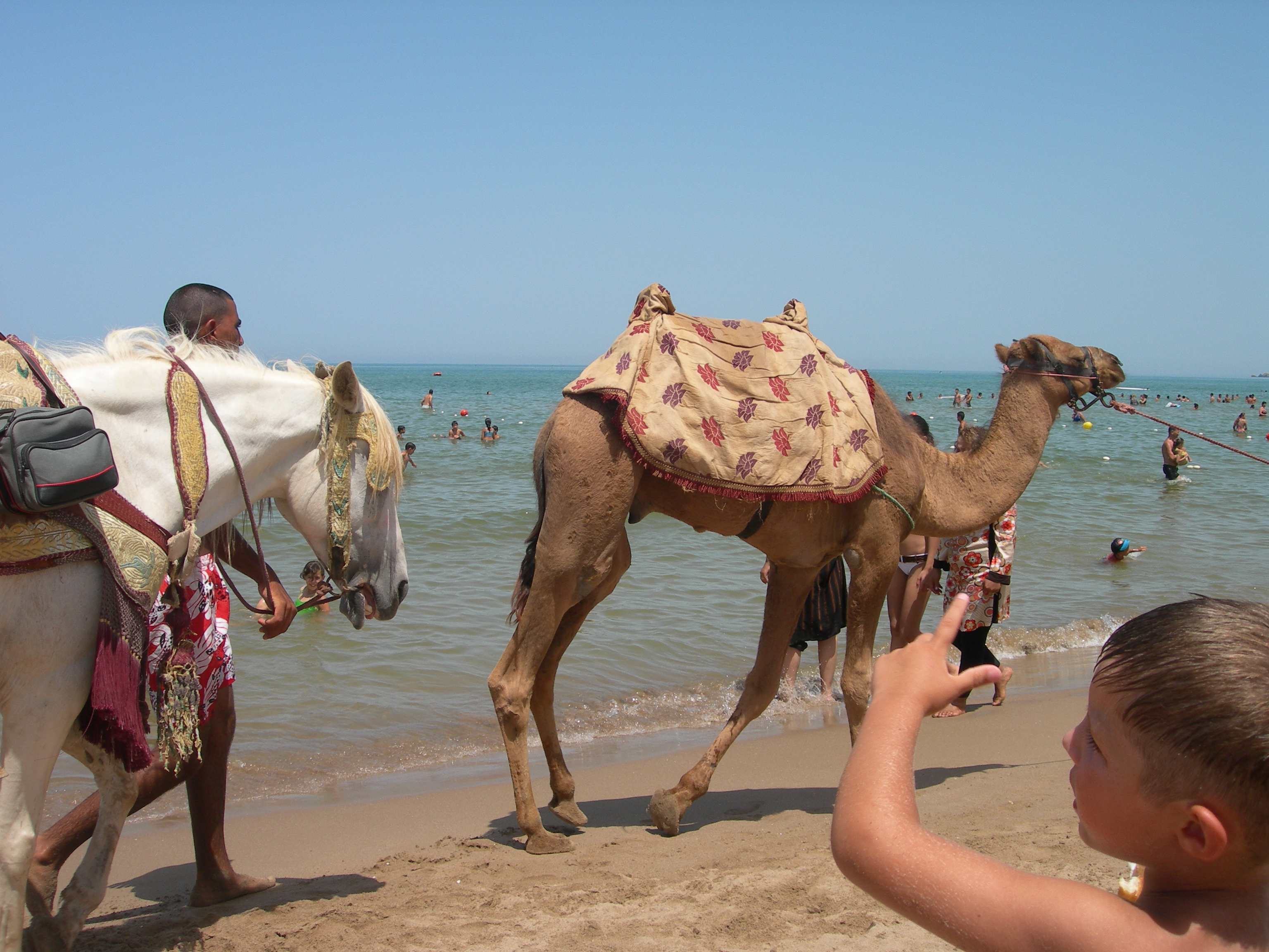 SAIDIA  ALQUILER Y VENTA DE APARTAMENTOS Y VILLAS  Tus mejores vacaciones en Saidia Marruecos
