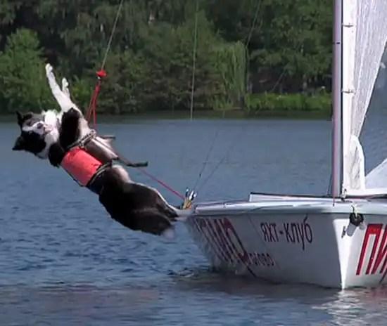 In barca a vela con il tuo cane.