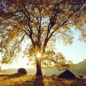 Die Unfähigkeit und Bedürftigkeit der Natur