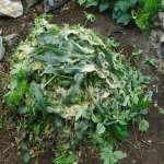 グリーン堆肥づくり:No.6堆肥の仕込み(1)