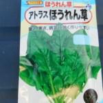 ホウレン草(5):播種