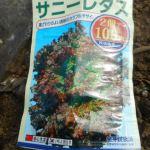 サニーレタス(2):播種