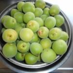 菜園日記:生梅の収穫