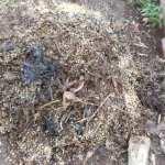 グリーン堆肥づくり:No.4G堆肥の切り替えし
