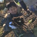 菜園日記:孫の野菜収穫