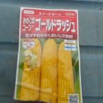 トウモロコシ(2):種を直播する