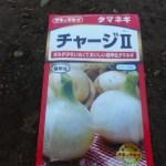 玉ネギ:苗床に播種(1)