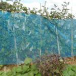 ナス:秋ナスの追肥と17号台風対策