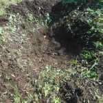 肥料づくり:草木灰をつくる炉を整備する