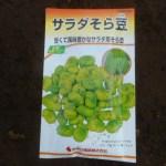 そら豆:播種