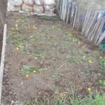 秋播きスティックブロッコリー:土づくり