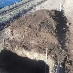 ヤマイモ:掘り上げた土に肥料を施す