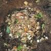 グリーン堆肥づくり:No.14G堆肥の仕込み(1)