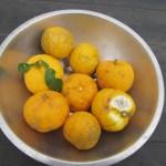 菜園日記:地主さんから柚子をいただく