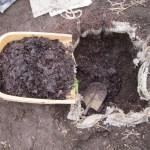 サツマイモ:踏込み温床の整備