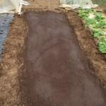 春播きゴボウ:用土の篩い分け