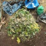 グリーン堆肥づくり:No.4G堆肥の仕込み(1)