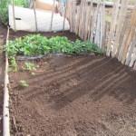 イチゴの育苗:育苗床づくり