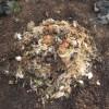 グリーン堆肥づくり:No.5G堆肥の仕込み(3)